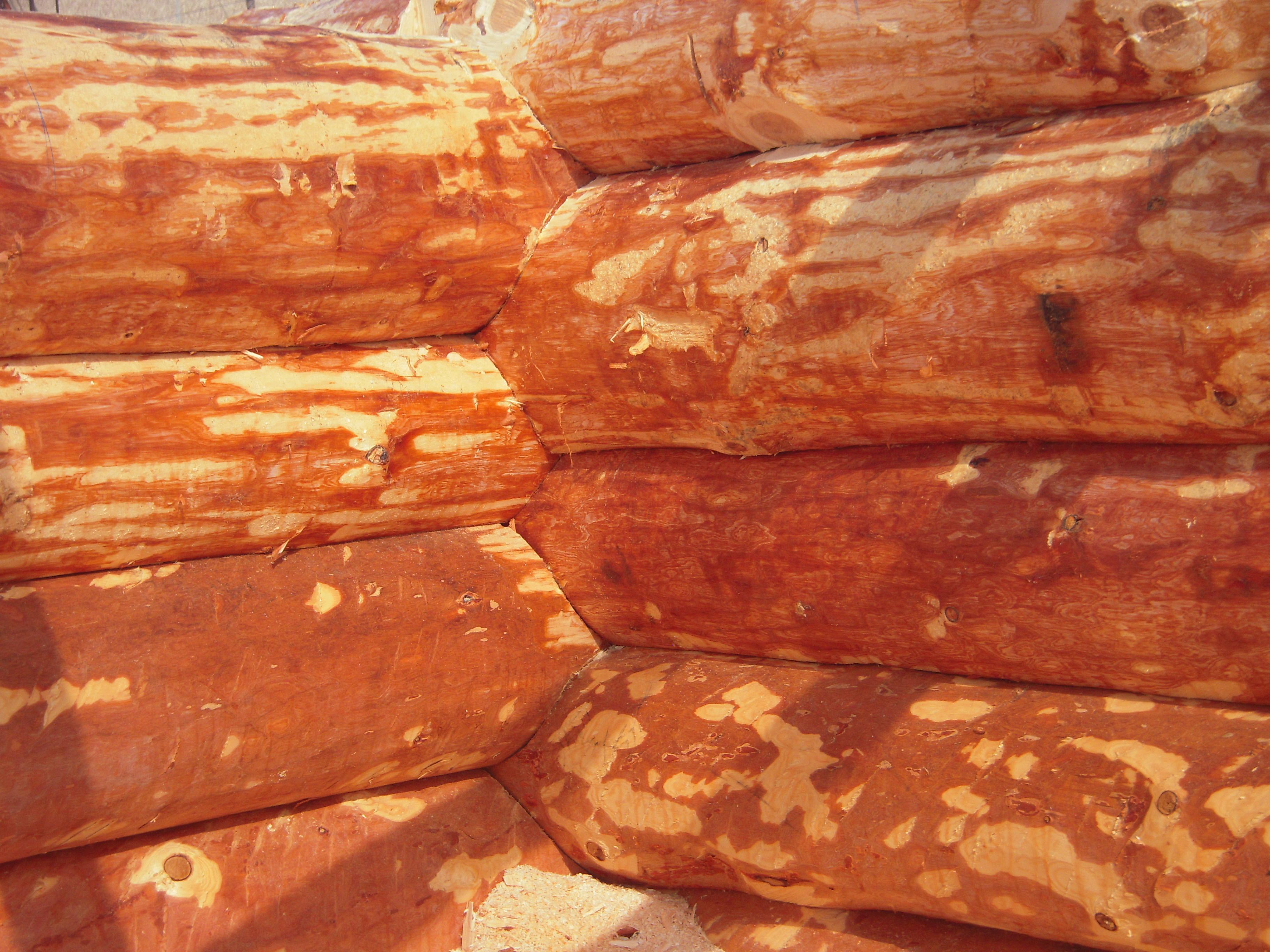 Casa di tronchi canadese cedr syberyjski for Case in legno polonia