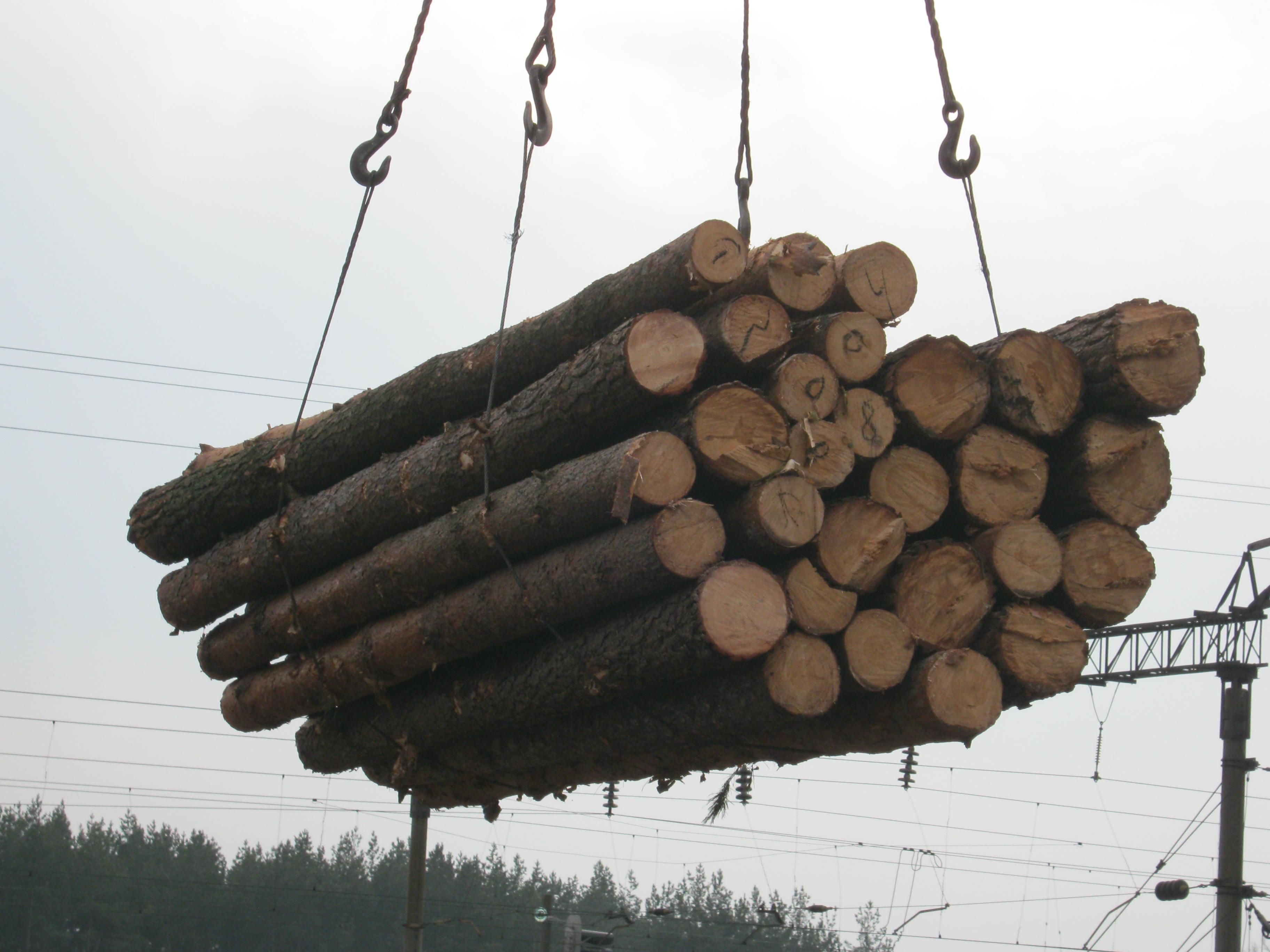 Trituration, pin (pinus sylvestris) - bois rouge